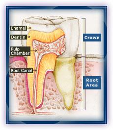 Zdrav zub